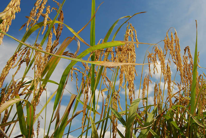 Two new publications on food security in Africa
