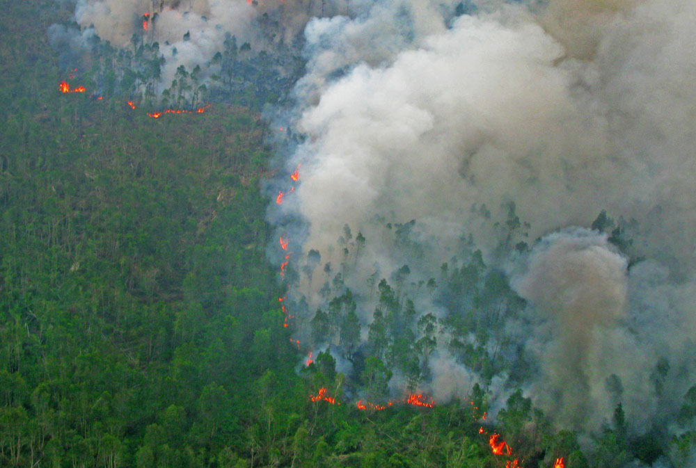 Fire in a tropical forest