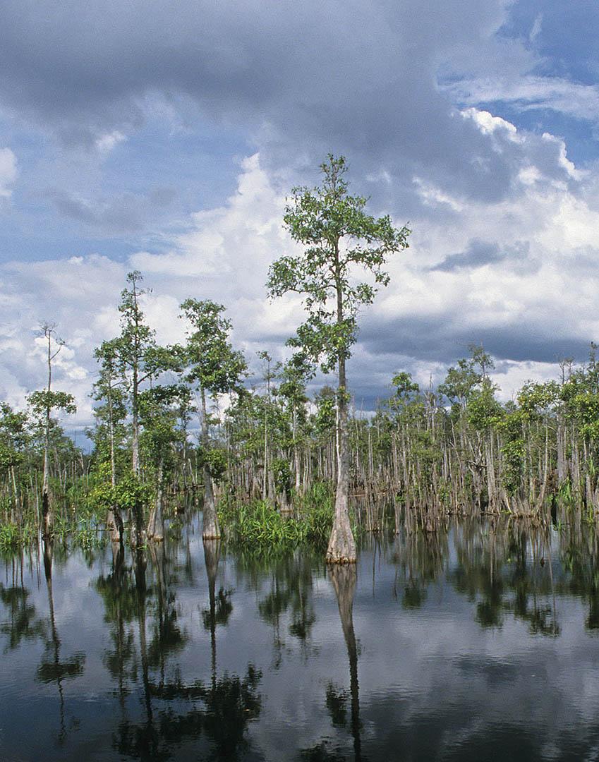 peat_swamp