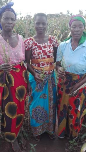 Women holding striga
