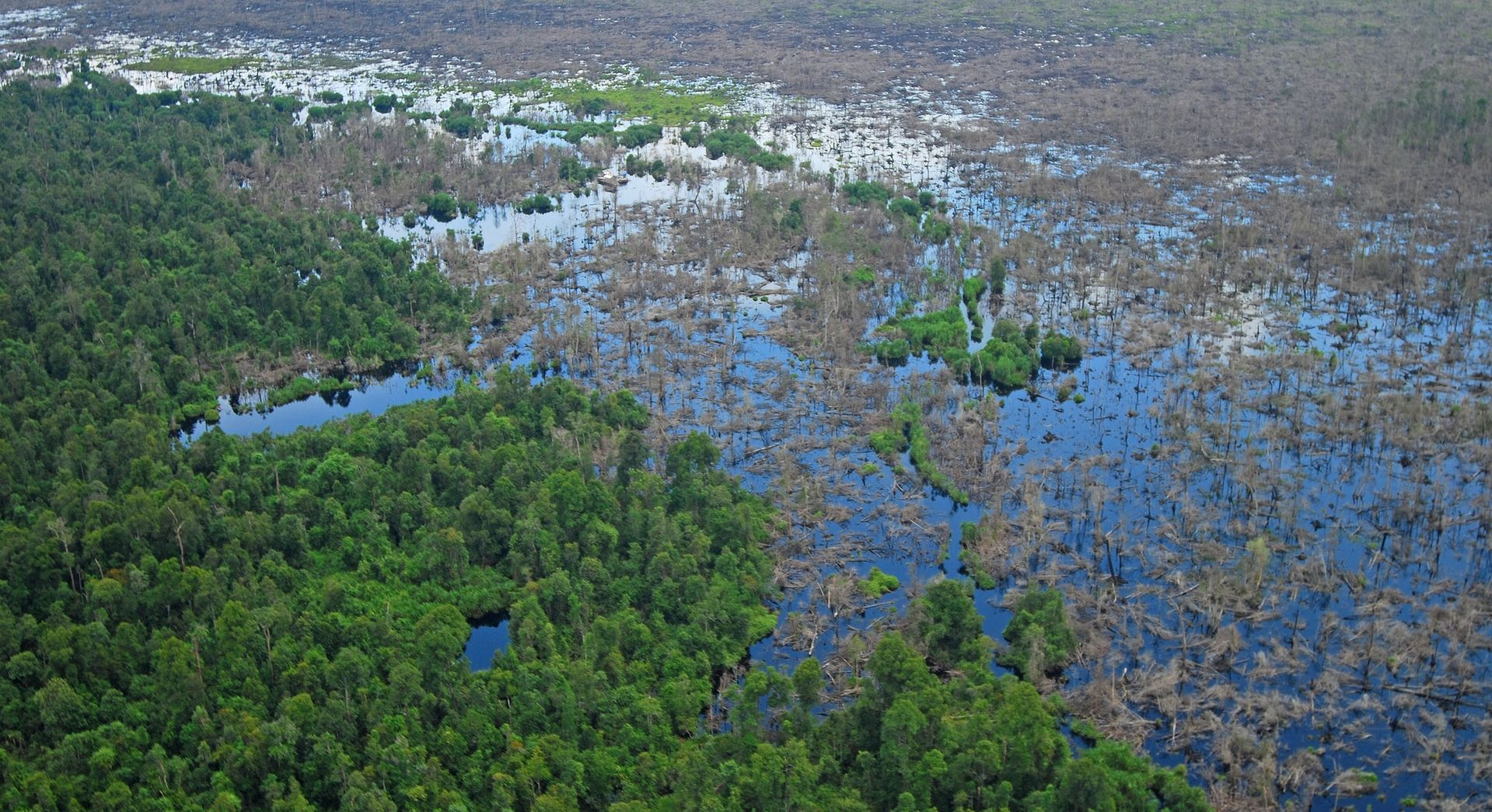 3D mapping of 15 million hectares of peatlands supporting BRG - the Indonesian Peat Restoration agency