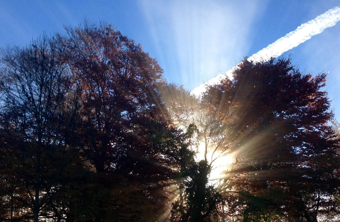 Satellitenbasiertes System quantifiziert Ökosystemleistungen des Waldes