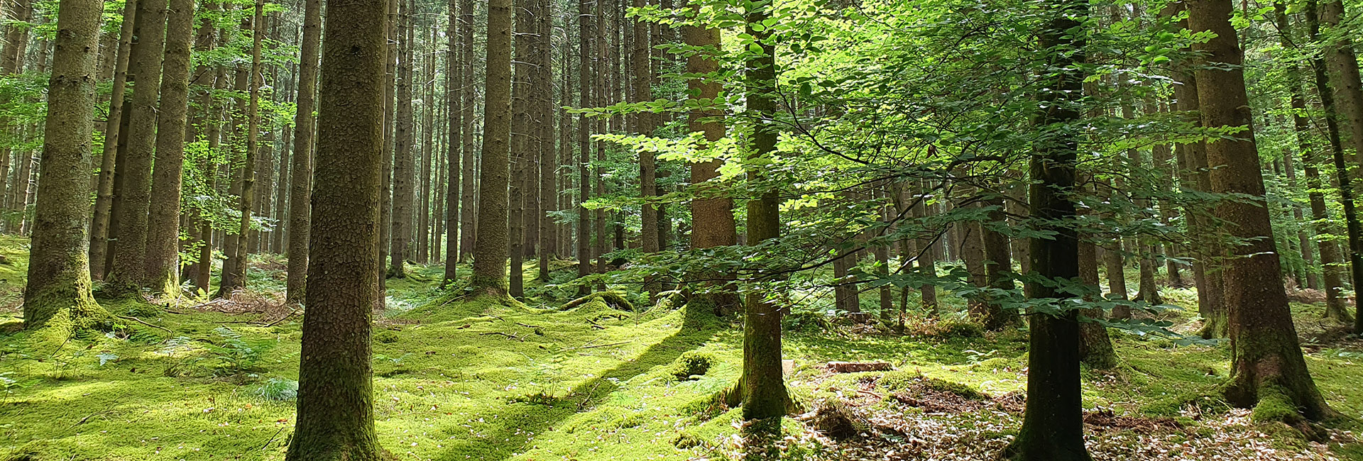 Waldklimaprojekte_RSS_header